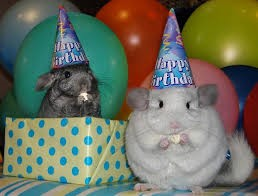 Hampster Birthday
